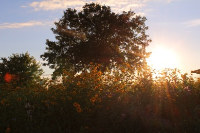 The sun sets over a vast oak prairie on the Valley View segment of the Ice Age Trail.
